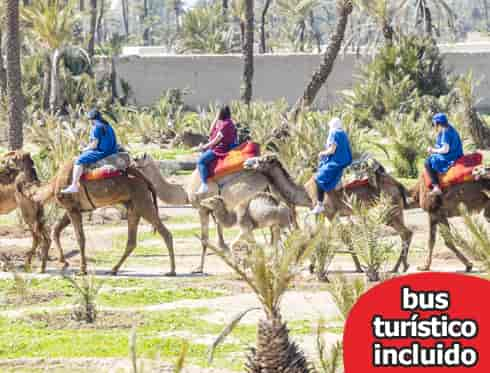 Tour en camello y Marrakech City Tour